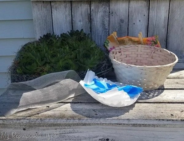 repurposed Easter basket succulent planter