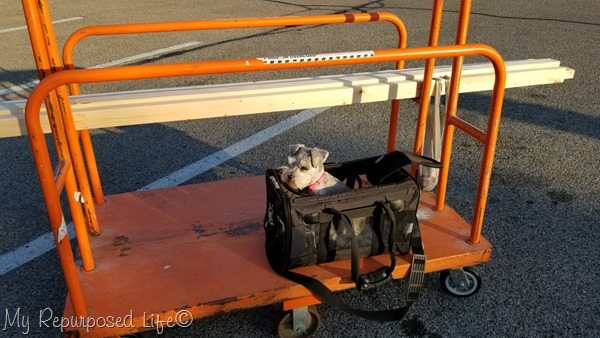 lulu mae shopping at home depot