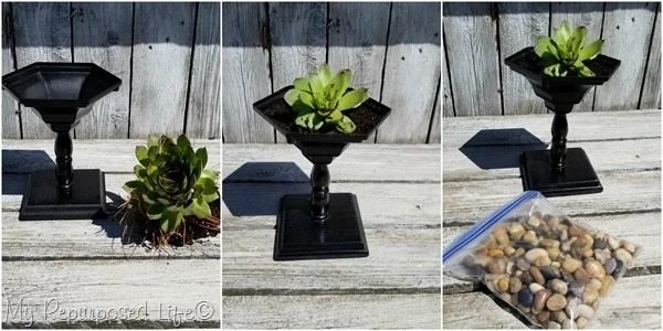 plant succulent in small wooden pedestal planter