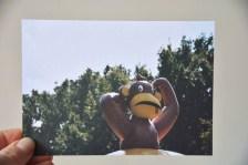 Postkarte_Affe im Park (2)