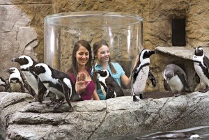 Ripley's Penguin Playhouse in Ripley's Aquarium
