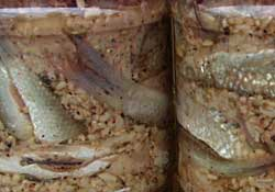 Fermented Fishes