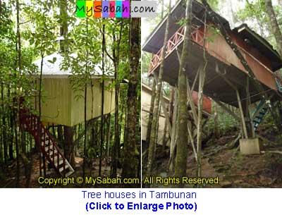 Tree House