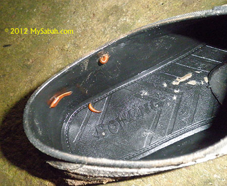 leeches in shoes
