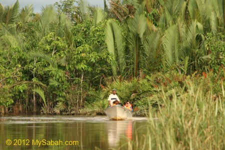 swampy area of Bongawan River