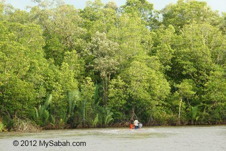 seaward mangrove zone