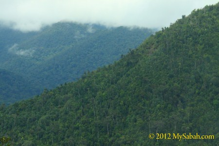 forested hills of Telupid