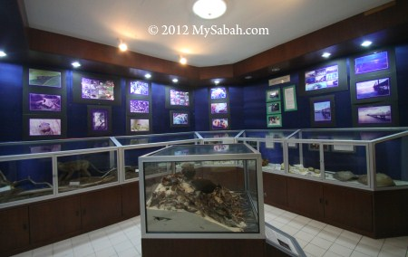 exhibition in Sabah Parks office