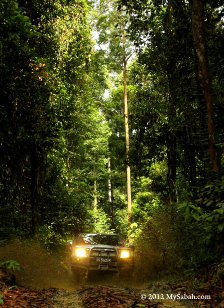 4WD in Imbak forest