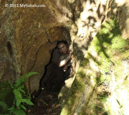 man in tree hole