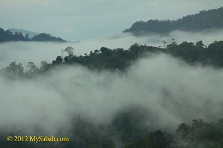 misty Borneo forest