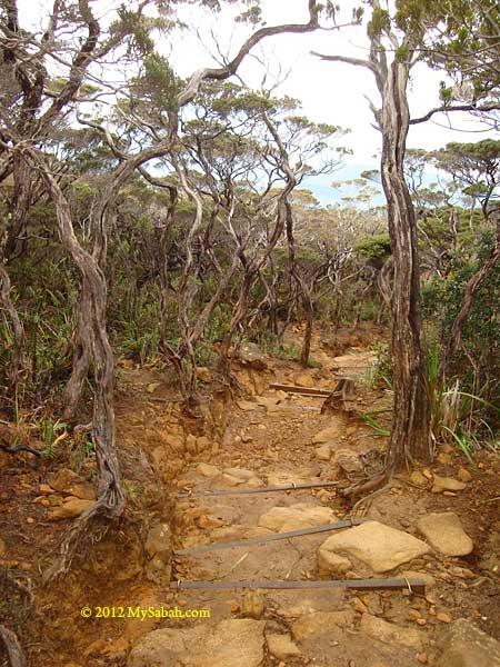 ultrabasic rocks of Mt. Kinabalu