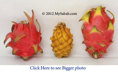 3 types of dragon fruit (火龙果)