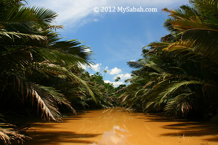 nipah swamp