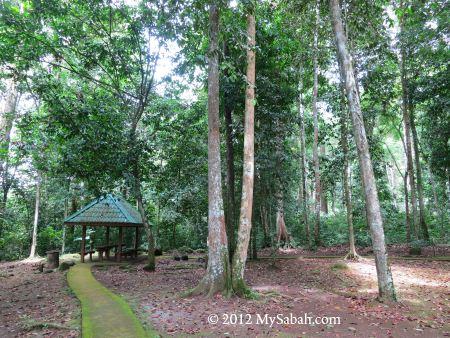starting point to Bukit Tongkat Ali