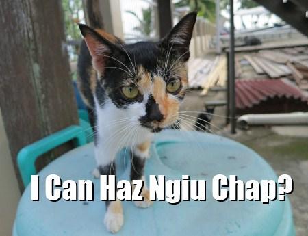 Sabah LOL Cats