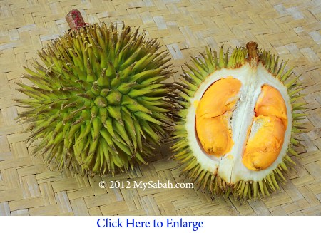 orange flesh durian (Durio oxleyanus)