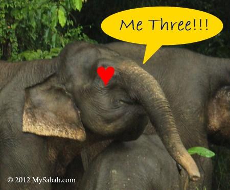 elephant loves durian