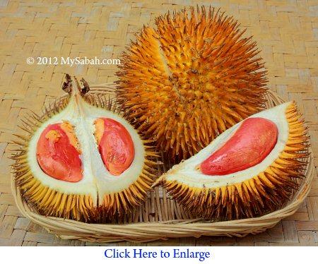 red flesh durian (Durio graveolens)