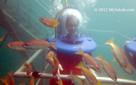 sea walking in reef pontoon