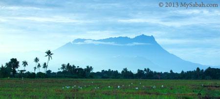 Mount Kinabalu in Kota Belud