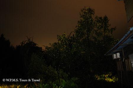 fireflies on the tree