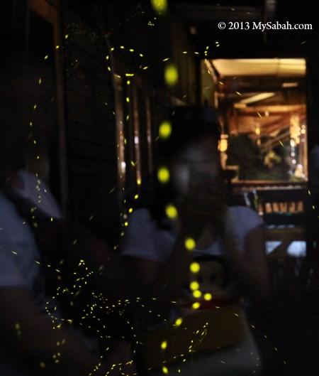 fireflies of Weston