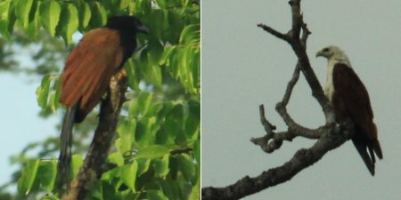 birds in Klias
