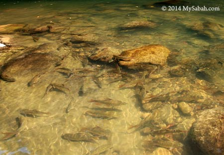 fishes in river