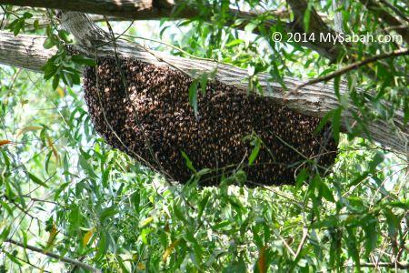 wild giant honey