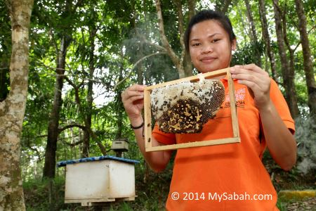 holding a honeycomb frame