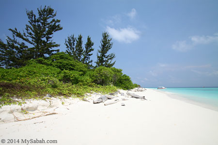 forest and beach of Mengalum Island