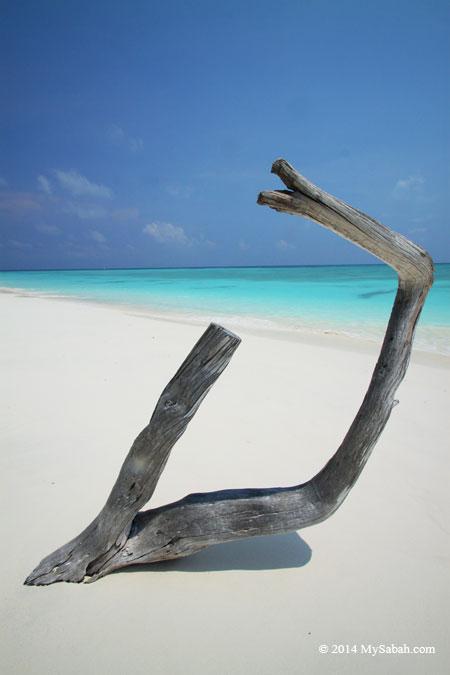 wood on the beach of Mengalum