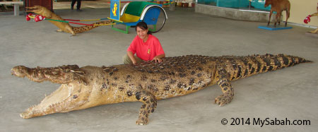 man eater crocodile