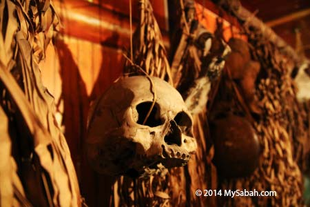 skull from headhunting era