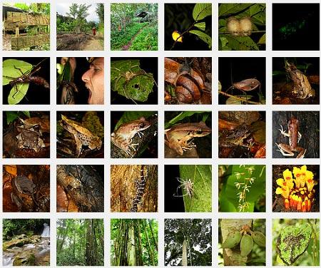 photo album of Lupa Masa Jungle Camp