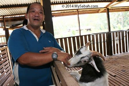playful goat