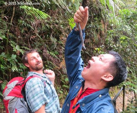 giant earthworm of Kinabalu Park