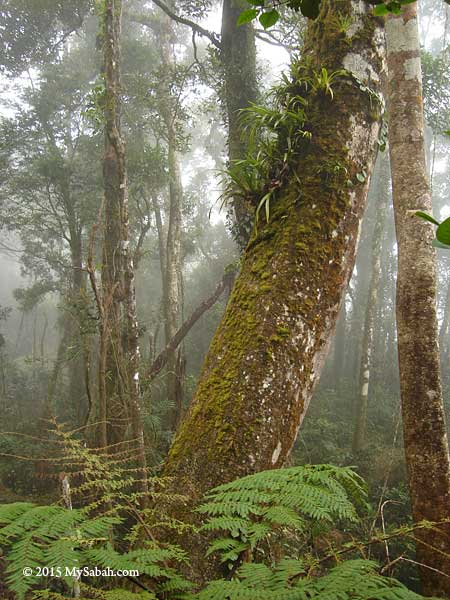 mossy montane forest