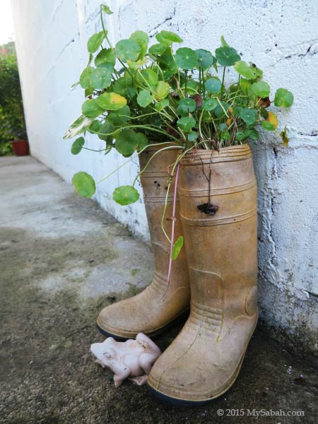 plant in boots