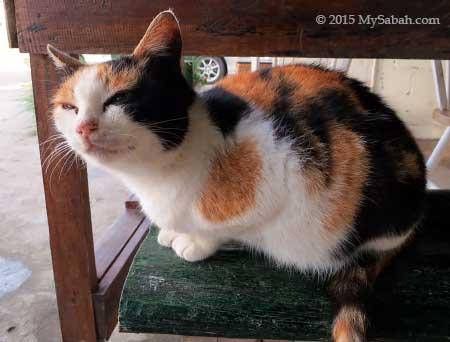 cat of Little Hut