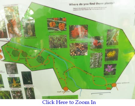 layout map of Botanical Garden in Kinabalu Park