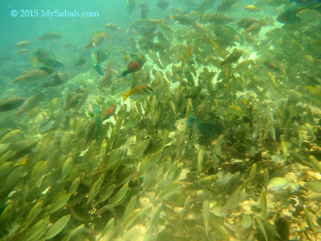 fishes in Manukan Island