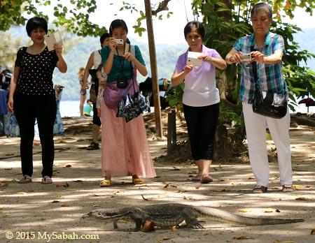 tourists taking photos of monitor lizard