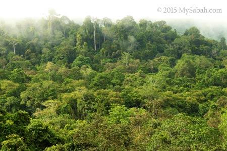 forest of Deramakot
