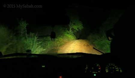 night safari on 4WD