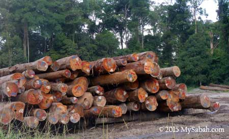 timber log for auction
