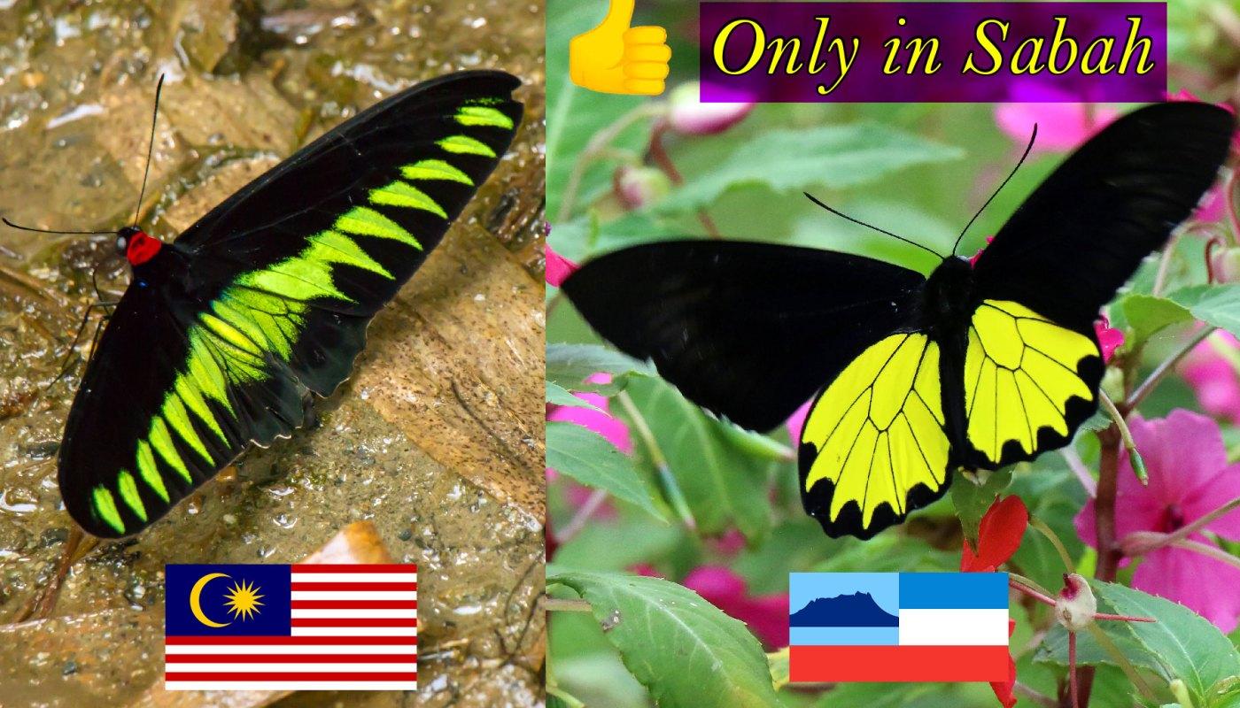 Butterflies of Malaysia