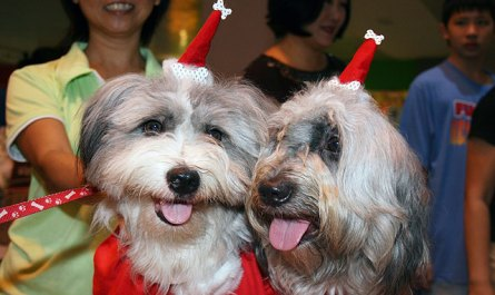Dogs in Xmas dress