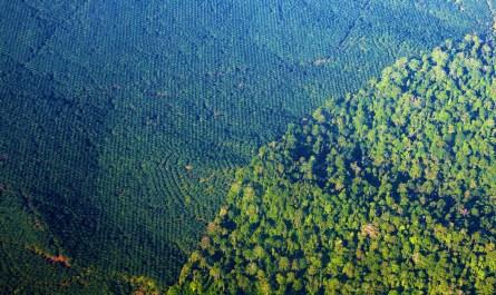 oil palm vs rainforest.jpg